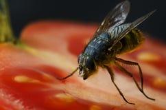 Chiuda in su della mosca su alimento Immagine Stock