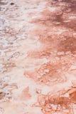 Chiuda su della palude d'acqua salata in saline in sal Capo Verde - Cabo Ver Immagine Stock Libera da Diritti