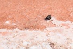 Chiuda su della palude d'acqua salata in saline in sal Capo Verde - Cabo Ver Immagini Stock