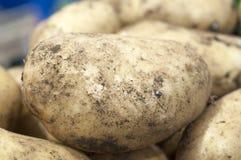 Chiuda su della patata Fotografia Stock Libera da Diritti