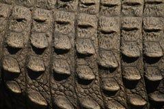 Chiuda in su della pelle del coccodrillo Fotografie Stock Libere da Diritti