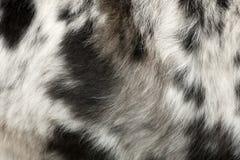 Chiuda in su della pelliccia del cane Fotografia Stock