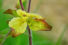 Chiuda su della pianta delle foglie fotografia stock