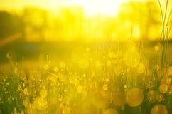 Chiuda su della riflessione delle gocce di acqua in erba verde fresca illuminata da luce calda dorata del sol levante fotografie stock libere da diritti