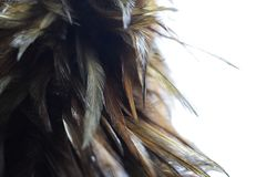 Chiuda su della scopa della piuma su fondo bianco fotografia stock libera da diritti