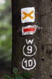 Chiuda su della via di escursione che traccia le marcature sull'albero in foresta fotografia stock libera da diritti