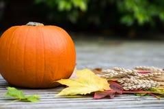Chiuda su della zucca, del grano e di Autumn Leaves arancio su Woode Fotografia Stock