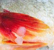 Chiuda su delle alette del pesce immagine stock
