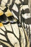Chiuda su delle ali della farfalla Fotografia Stock