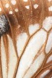 Chiuda su delle ali della farfalla Fotografie Stock Libere da Diritti