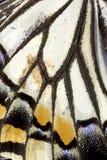 Chiuda su delle ali della farfalla Immagini Stock Libere da Diritti