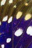 Chiuda su delle ali della farfalla Immagine Stock