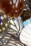 Chiuda su delle ali della farfalla Immagine Stock Libera da Diritti
