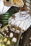 Chiuda su delle ali della farfalla Fotografie Stock