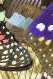 Chiuda su delle ali della farfalla Immagini Stock