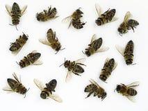 Chiuda su delle api morte isolate su fondo bianco, concetto delle api muoiono fotografia stock