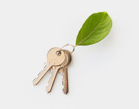 Chiuda su delle chiavi della casa e della foglia verde Immagine Stock