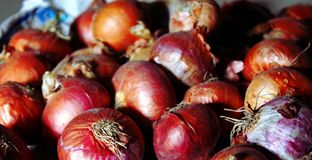 Chiuda su delle cipolle rosse organiche della natura di verdure Fotografia Stock