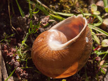 Chiuda su delle coperture vuote della lumaca fuori sul det marrone al suolo Fotografia Stock