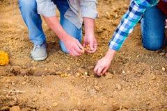 Chiuda su delle coppie senior irriconoscibili che piantano le cipolle nella fila Fotografia Stock