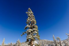 Chiuda in su delle filiali congelate e della neve che cadono contro il cielo blu Fotografia Stock