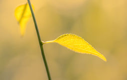 Chiuda su delle foglie al sole Immagini Stock Libere da Diritti