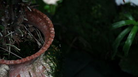Chiuda su delle foglie di un fiore tropicale stock footage