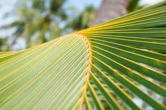 Chiuda su delle foglie tropicali delle palme Immagine Stock Libera da Diritti