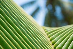 Chiuda su delle foglie tropicali delle palme Fotografie Stock