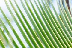 Chiuda su delle foglie tropicali delle palme Fotografia Stock Libera da Diritti