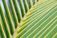 Chiuda su delle foglie tropicali delle palme Immagini Stock Libere da Diritti