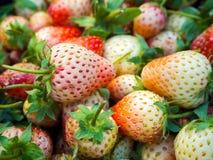 Chiuda su delle fragole fresche mature Fotografia Stock