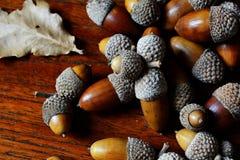 Chiuda su delle ghiande della quercia che si trovano sulla tavola del tek Immagine Stock Libera da Diritti