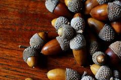 Chiuda su delle ghiande della quercia che si trovano sulla tavola del tek Fotografia Stock