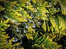 Chiuda su delle gocce di acqua in un web di ragni fotografie stock
