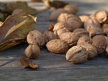 Chiuda su delle noci mature con le foglie si trovano su terra di legno in autunno fotografie stock libere da diritti
