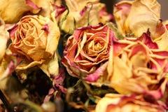 Chiuda su delle rose asciutte su fondo scuro immagine stock