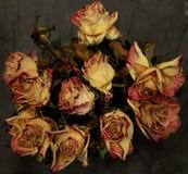 Chiuda su delle rose asciutte su fondo scuro fotografia stock libera da diritti