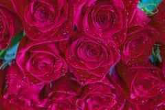 Chiuda su delle rose rosse e delle gocce di acqua Fotografie Stock Libere da Diritti