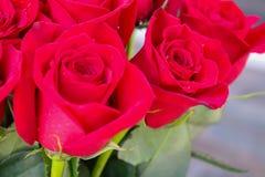 Chiuda su delle rose rosse e delle gocce di acqua Fotografia Stock Libera da Diritti