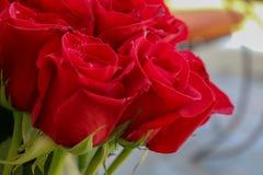 Chiuda su delle rose rosse e delle gocce di acqua Immagine Stock Libera da Diritti