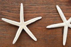 Chiuda su delle stelle marine Fotografie Stock Libere da Diritti