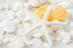 Chiuda su delle stelle marine e delle conchiglie sul fondo bianco della sabbia Fotografie Stock