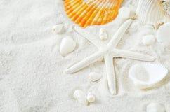 Chiuda su delle stelle marine e delle conchiglie sul fondo bianco della sabbia Fotografia Stock Libera da Diritti