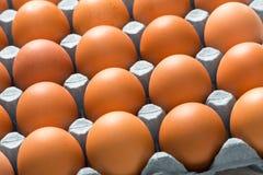 Chiuda su delle uova del pollo di Brown in vassoio per fondo Fotografia Stock Libera da Diritti