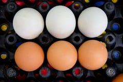 Chiuda su delle uova dell'anatra e dell'uovo del pollo Fotografia Stock