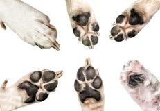 Chiuda su delle zampe del cane isolate su fondo bianco le zampe del cucciolo e del cane hanno messo isolato su bianco Fotografie Stock Libere da Diritti
