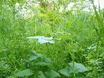 Chiuda su di alta erba verde lunga in pieno delle piante differenti e di W Fotografie Stock Libere da Diritti