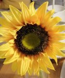 Chiuda su di bei fiori artificiali gialli del girasole Immagini Stock