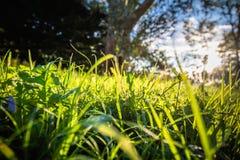 Chiuda su di bei prato ed alberi verdi con illuminazione della parte posteriore del sole Fotografia Stock Libera da Diritti
